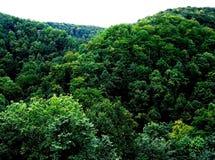 Une couronne verte des arbres à feuilles caduques dans une forêt de montagne image libre de droits