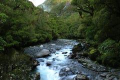 Une crique dans la forêt tropicale Images stock