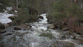 Une crique sauvage dans la forêt bavaroise banque de vidéos
