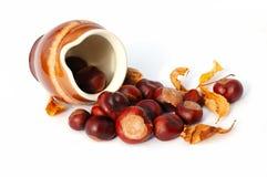 Une cruche et graines de marron d'Inde Image libre de droits