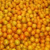 Une culture de butoir des oranges Images libres de droits