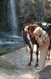 Une dame d'un âge élégant parle à un cheval et la frotte photographie stock