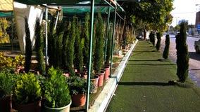 Une des maisons vertes qui vendent des buissons pour la décoration dans la ville de Zarqa Jordan Image libre de droits
