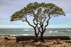 Une des plages les plus belles et fortement les plus évaluées au monde - plage de Wailea, Maui, Hawaï, Etats-Unis photo libre de droits