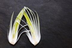 Une disposition de deux grands oignons de salade avec l'espace de copie Image stock