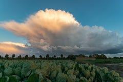 Une douche orageuse a un aspect dramatique contre le ciel bleu pendant qu'elle est illuminée par le coucher de soleil image stock