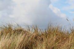 une dune est une colline du sable lâche construite par des processus éoliens et s'appelle l'arénaire d'Ammophila, gras européens  Images stock