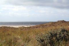 une dune est une colline du sable lâche construite par des processus éoliens et s'appelle l'arénaire d'Ammophila, gras européens  Images libres de droits