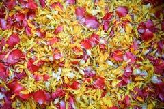 Une eau sacrée faite d'eau douce écartant par des pétales de fleur, utilisé pour verser sur la main plus ancienne du ` s pendant  image libre de droits