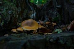 Une famille de peu de champignons sur un fond d'arbre image stock