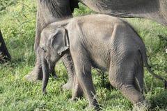 Une famille des éléphants affectueux Images libres de droits