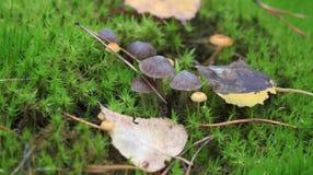Une famille des champignons Photo libre de droits