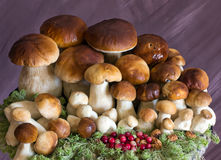 Une famille nombreuse des champignons de couche Images stock