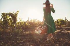 Une femme élégante entre dans un champ où les vignobles se développent images stock