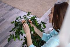 Une femme avec un tissu de microfiber essuie la poussière des feuilles vertes, soin des usines photographie stock