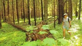 Une femme dans des lunettes de soleil avec un sac à dos flâne par la forêt à côté d'un arbre tombé banque de vidéos