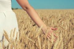 Une femme dans un domaine de blé, contacts l'épillet d'or image libre de droits