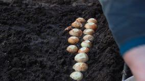 Une femme est occupée à planter des oignons dans le sol, plan rapproché banque de vidéos