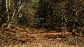 Une femme et une course d'enfant à partir du chien dans la forêt clips vidéos