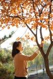 Une femme et un arbre de Ginko dans la chute Photographie stock libre de droits
