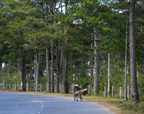 Une femme faisant du vélo sur la route de montagne images libres de droits
