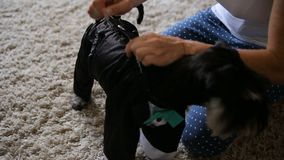 Une femme habille un chiot noir de schnauzer miniature se reposant dans la chambre banque de vidéos