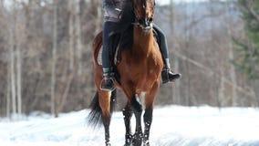 Une femme montant un beau cheval brun dans la forêt sur une terre neigeuse banque de vidéos