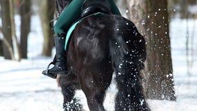 Une femme montant un cheval brun foncé dans la forêt sur un chemin neigeux banque de vidéos