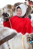 Une femme parmi les troupeaux de Nenets de renne Images stock