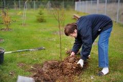 Une femme plantant un arbre Photo libre de droits