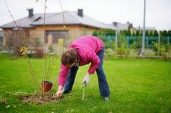 Une femme plantant un arbre Images stock