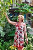 Une femme rassemble des raisins Image stock