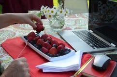 Une femme supérieure mange les baies fraîches et travailler indépendant sur un ordinateur portable dans un jardin d'été Images stock