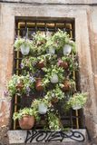 Une fenêtre complètement des pots de fleur sur une rue Images libres de droits