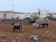 Une ferme de chèvre dans le village Tefia sur Fuerteventuria Photos stock