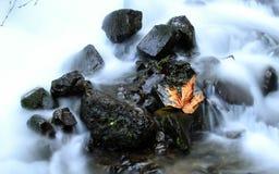 Une feuille d'automne dans une crique Image libre de droits