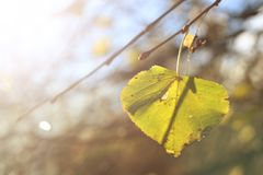 Une feuille d'automne sur l'arbre photographie stock libre de droits