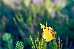 Une feuille d'automne sur un fond indistinct Photos libres de droits