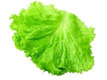 une feuille de salade d'isolement sur un fond blanc image libre de droits