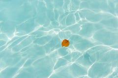 Une feuille en mer bleue Photo libre de droits