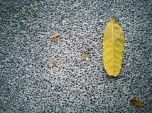 Une feuille jaune s'est laissée tomber sur le plancher en pierre photographie stock libre de droits