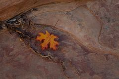 Une feuille rouge et jaune, des racines et un grès texturisé Image libre de droits