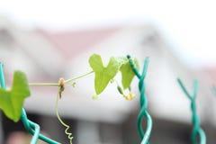 Une feuille verte avec la forme d'amour sur une barrière verte Photo libre de droits
