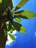 Une feuille verte dans le ciel Photos stock