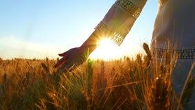 Une fille dans une robe blanche marche au-dessus d'un champ de blé, sa main touche les épillets mûrs du blé pendant le coucher du clips vidéos