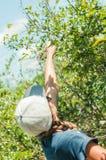 Une fille dans un chapeau s'étendant jusqu'aux myrtilles de sélection Image libre de droits
