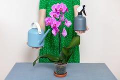 Une fille de fleuriste tient une boîte d'arrosage et un pulvérisateur près d'une orchidée pourpre Photos stock