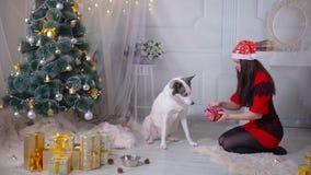 Une fille donnant un cadeau à son chien enroué près de l'arbre de Noël pendant la célébration de nouvelle année banque de vidéos