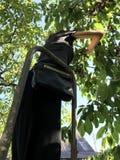 Une fille grande se tient sur une échelle et sélectionne les cerises fraîches d'un arbre Photos stock