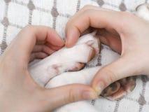Une fille tenant des pattes du ` un s de chien de blanc Photo stock